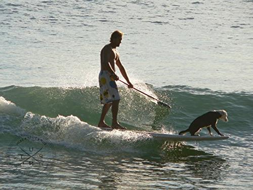 Dog Pad - 4 Grip the Nose of Paddleboards, & Surfboards. Warranty Forever Board